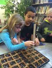 Measuring our seedlings